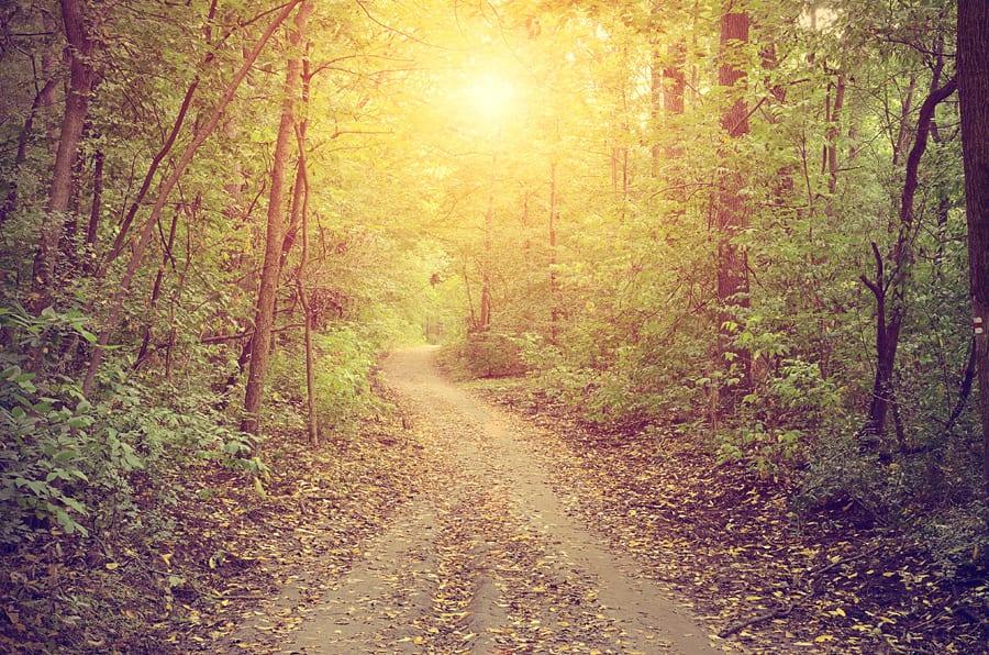 Finding My Path: My Reiki Healing Story